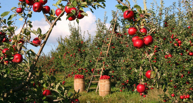 Frutatua Compra, almacenaje y logística refrigerada de frutas y hortalizas