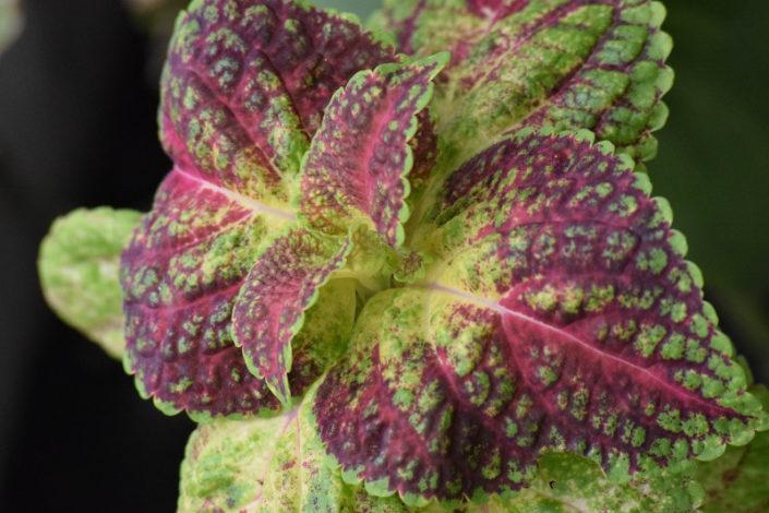 Frutatua Hierbas aromáticas